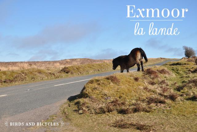 Exmoor la lande (2)