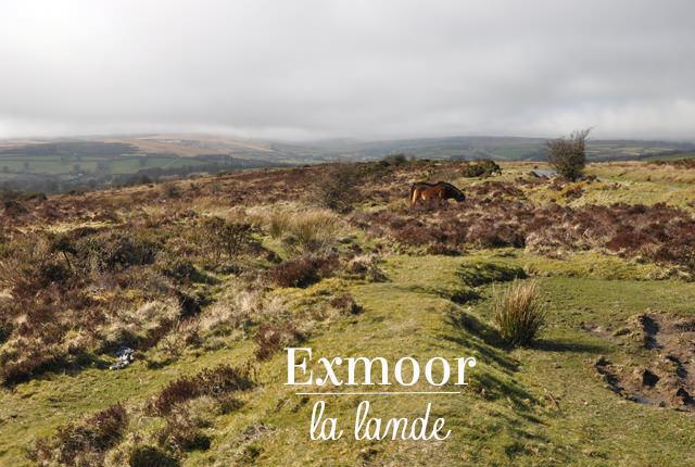 Exmoor la lande (3)
