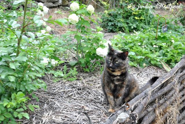 Chat au Jardin d'Hautpoul