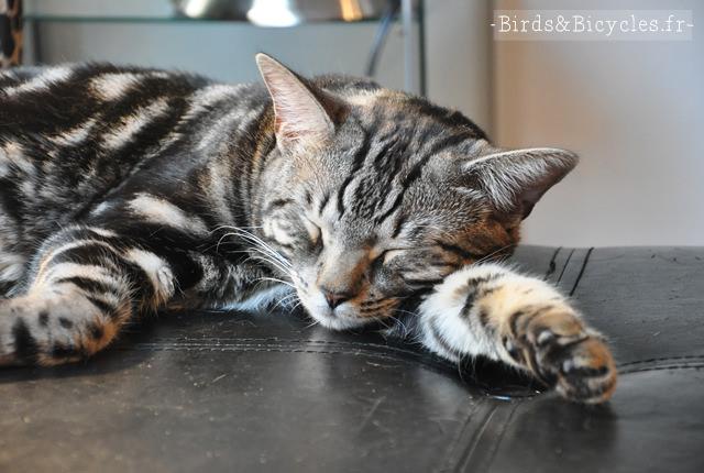 catvertising - le salon de coiffure à chats de montréal (2)