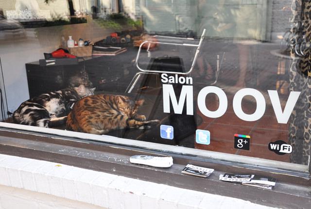 Le salon de coiffure à chats de montréal (4)