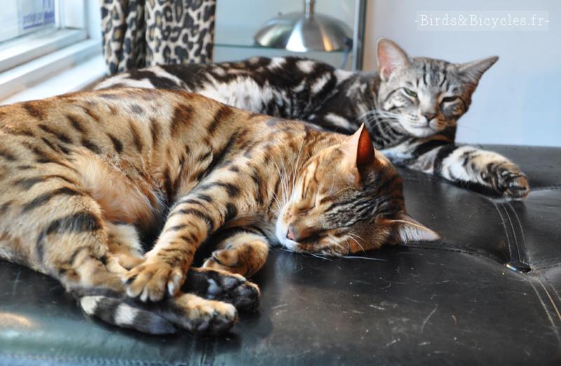 Chez Moov, le salon de coiffure à chats de montréal (6)