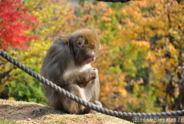 Un singe en automne