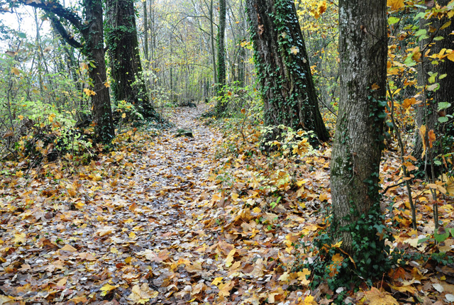 forêt suisse - Neuchatel - Ramée