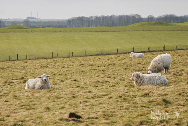 Moutons à Stonehenge