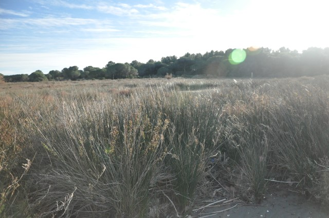Balade-Montpellier-Etang-du-Ponant (10)