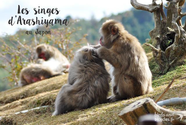 Découverte du Monkey Park Iwatayama sur le blog Birds & Bicycles