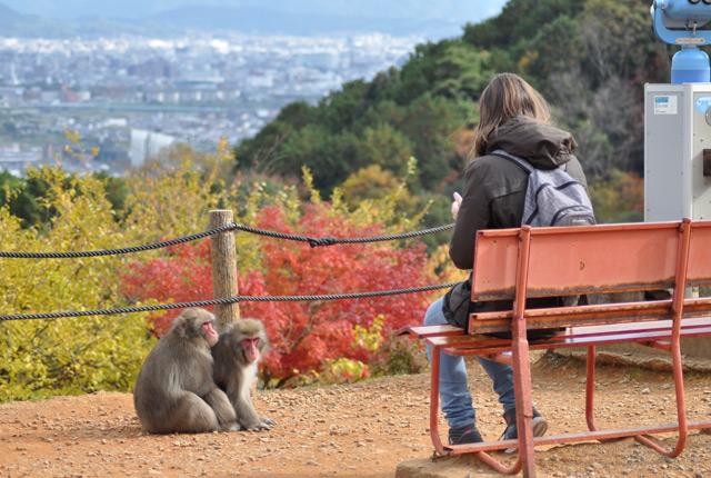 Rencontre-avec-macaques-japonais