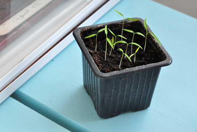 Jardiner à partir de graines