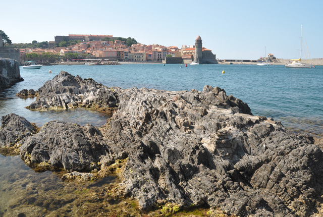 Escapade nature: observation marine à Collioure