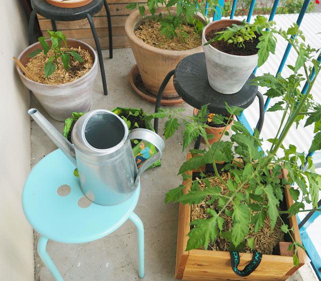 Jardinage urbain: je fais pousser quelques légumes sur mon balcon!