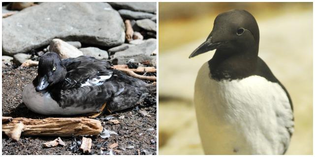 oiseaux-du-biodome-montreal-quebec