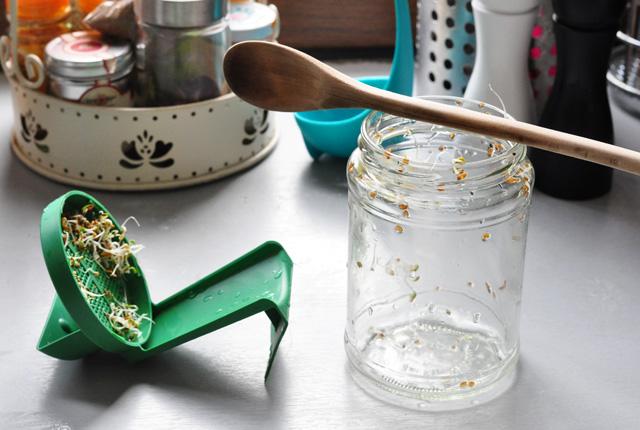 Essayer de faire pousser des graines germer dans un bocal