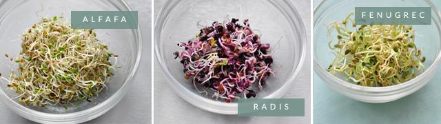Graines germées: radis, alfafa, fenugrec! Mon kit pour faire pousser des graines germées