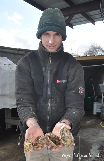 Taille des huîtres creuses