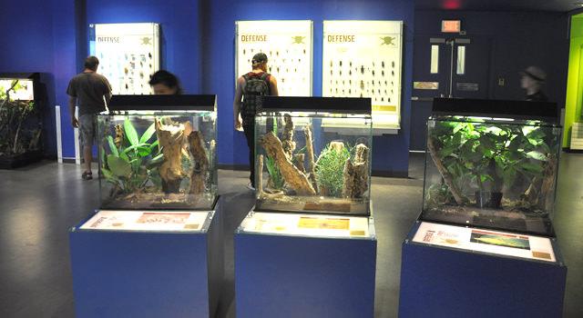 Insectarium de Montréal (2)