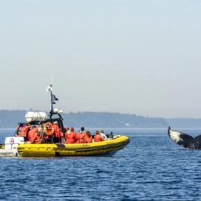 Les baleines de Tadoussac