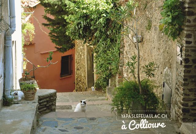 Chats dans les ruelles de Collioure