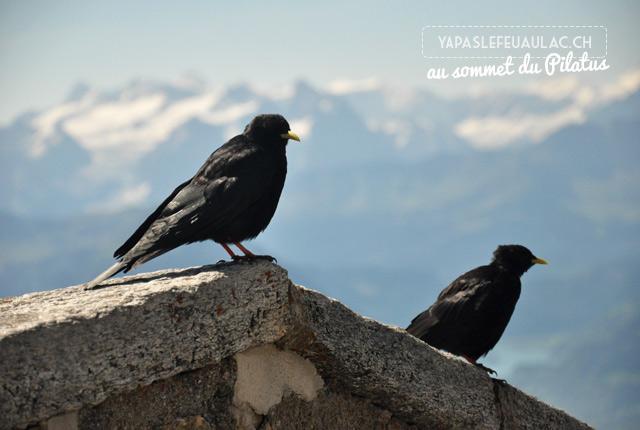 Vue sur les Alpes du Pilatus