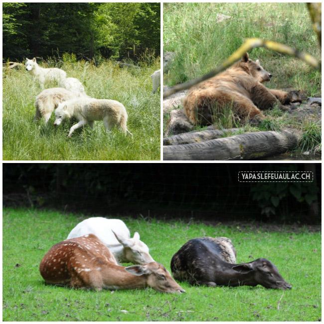 Visite du parc Sainte-Croix, un zoo magnifique en Lorraine qui présente la faune européenne en priorité, dans des enclos en semi-liberté.