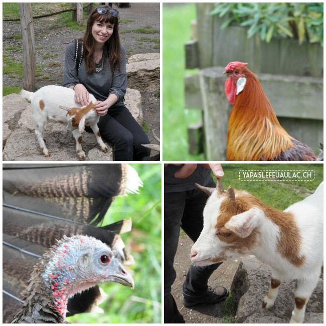 La ferme ancienne du parc Sainte-Croix, un zoo magnifique en Lorraine!