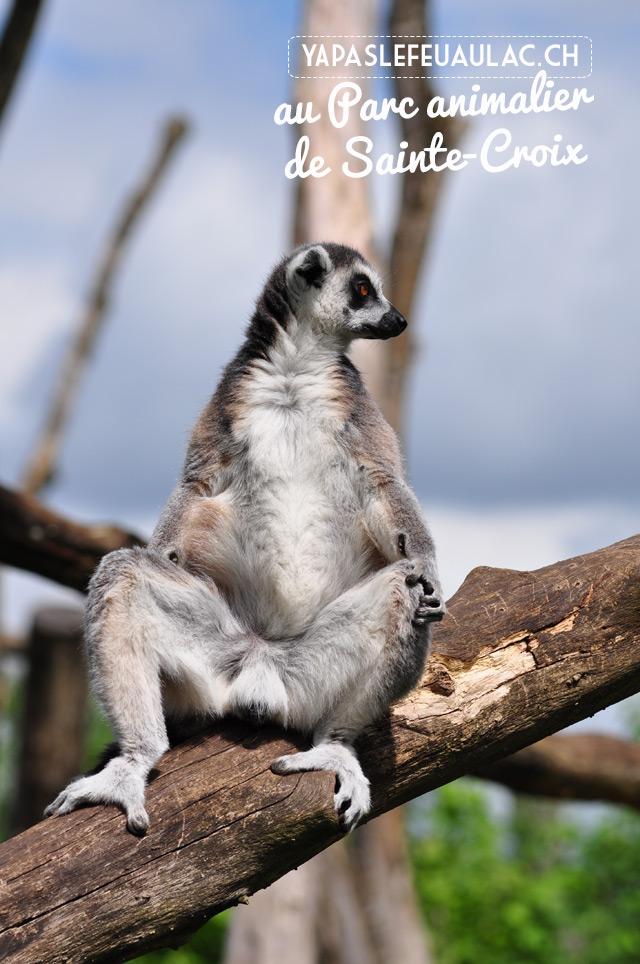 L'Ile aux Lémuriens du Parc Sainte Croix, un zoo magnifique en Lorraine qui présente différentes espèces de Madagascar, comme le maki catta