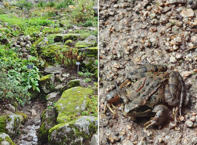 Jardin du Haut Chitelet en Lorraine: mes photos Crédit Yapaslefeuaulac