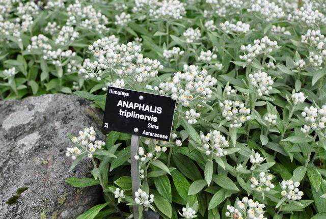 Un jardin botanique alpin en Lorraine