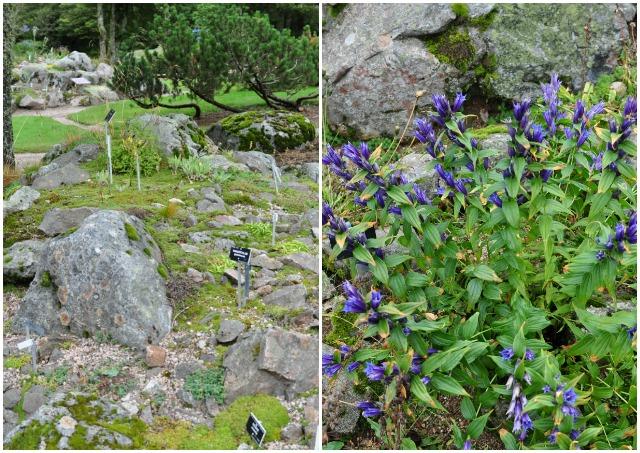 Jardin du Haut Chitelet: ses plantes en automne