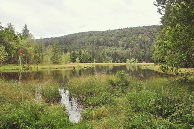 Balade dans les Vosges: Lac de Lispach et tourbières