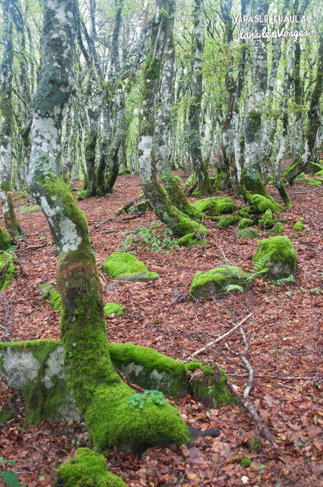 Hetres dans les Vosges - Rando Tour du Kastelberg