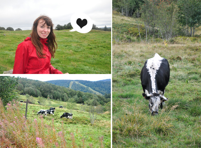 Yapaslefeuaulac et les vaches vogsiennes
