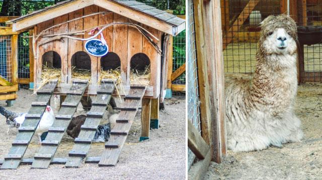 Ferme du Zoo sauvage de St Félicien