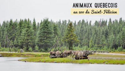 Visite du Zoo de Saint-Félicien au Québec