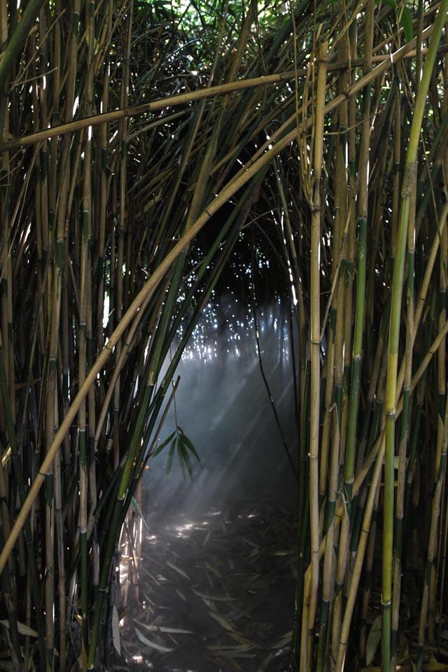 Tessin: un jardin botanique sur une ile