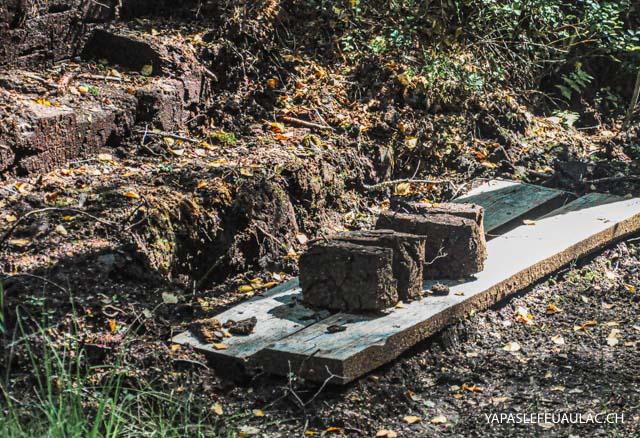 La tourbe, autrefois exploitée, aujourd'hui protégée en Suisse