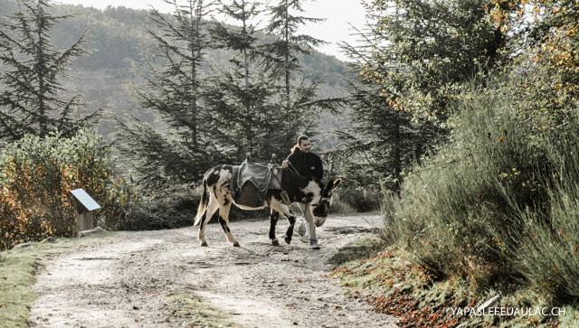 Balade avec un âne - Cévennes