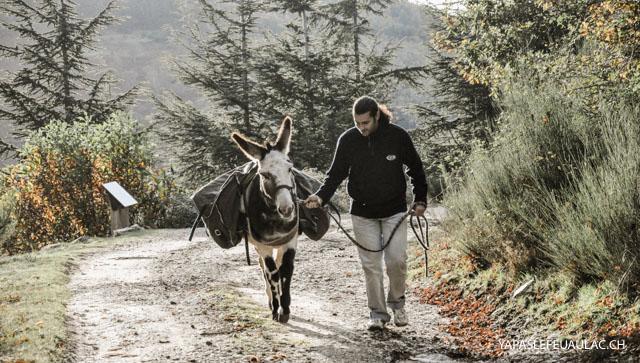 Se promener avec un âne sur les pas de l'écrivain Stevenson