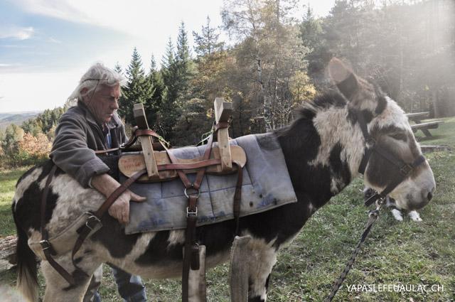 Arnacher un âne avant la balade