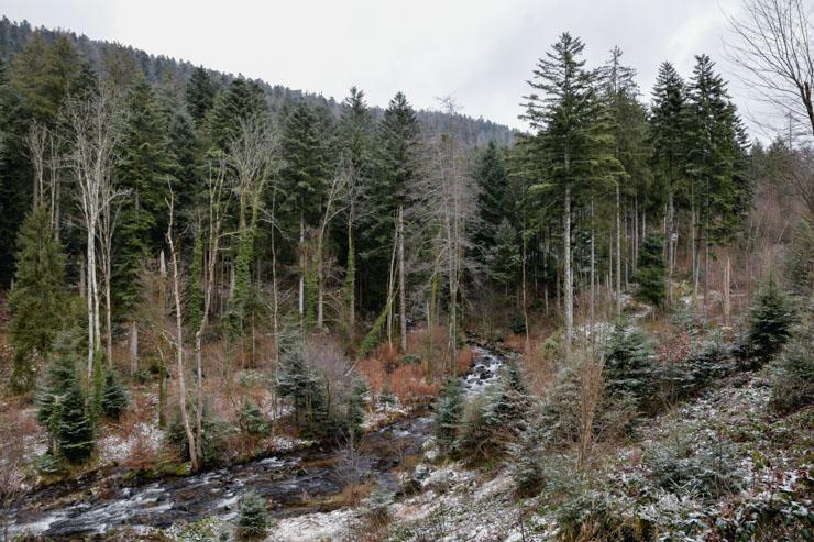 Randonnée à Gérardmer dans les Vosges