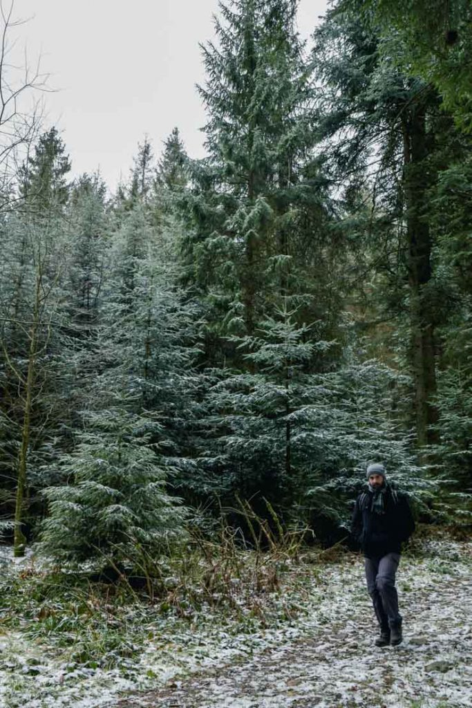 Dans les forêts des Vosges