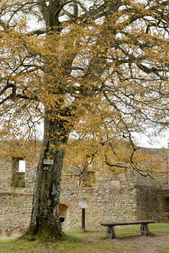 Ruines romantiques du château de Ferrette (Sundgau, Alsace)