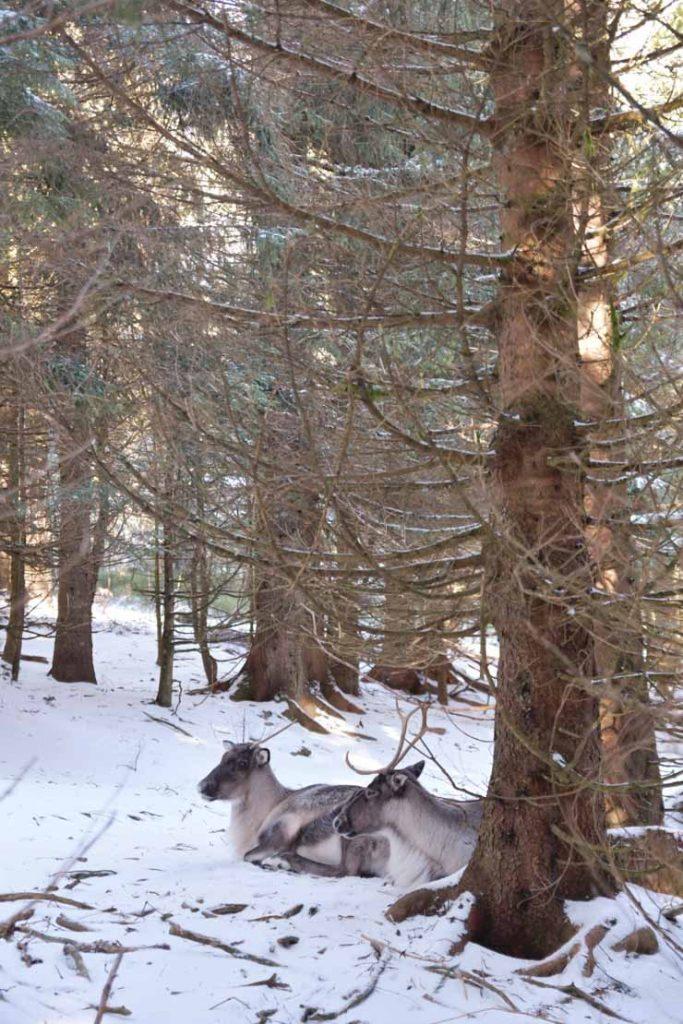 Blog d'escapades en Alsace - parc animalier en Alsace près de Colmar