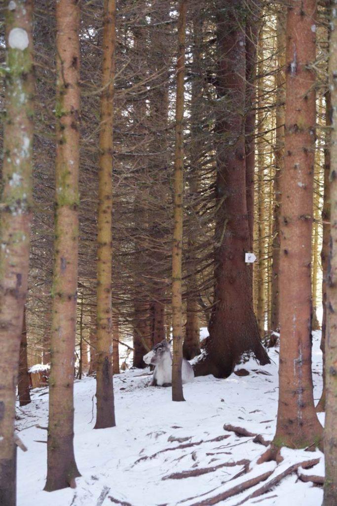La forêt enchantée de la Ferme aux Rennes en Alsace