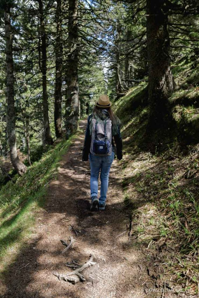 Randonner en Forêt Noire au sommet du Belchen