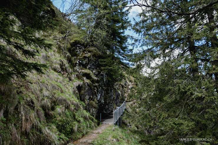 Randonner en Forêt Noire le tour du Belchen