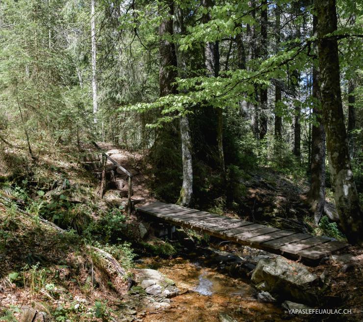 Balade en Forêt Noire: le tour du Feldberg (5 heures)