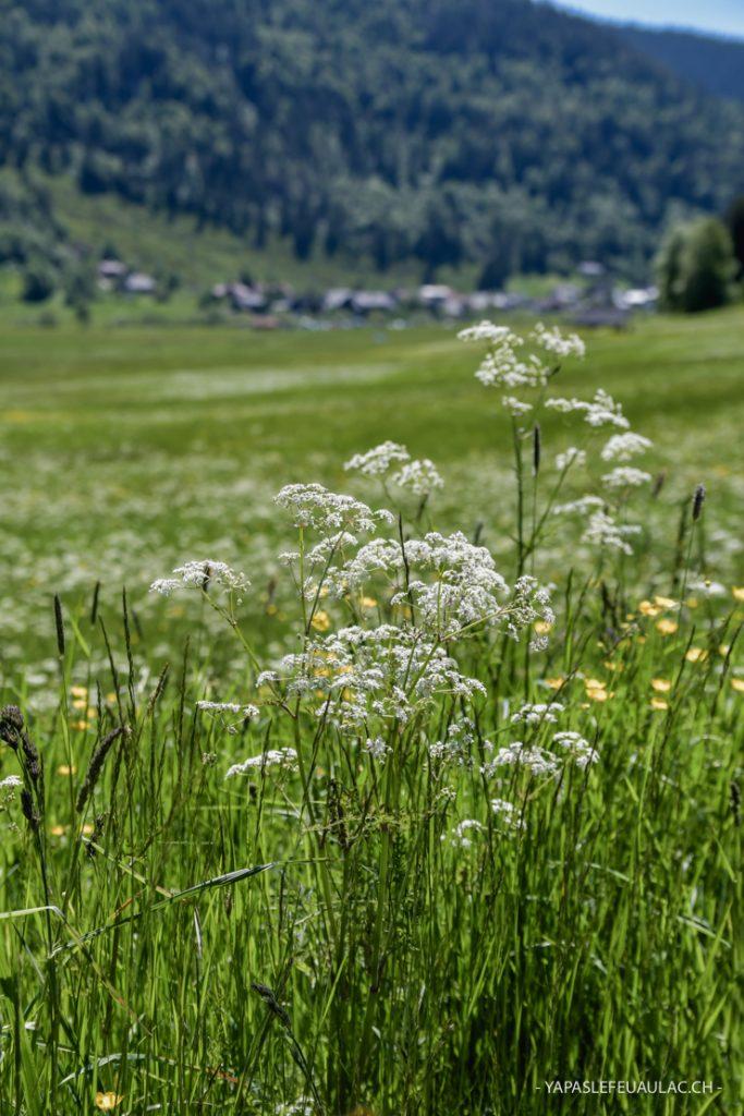 A travers champs au printemps en Forêt Noire du Sud
