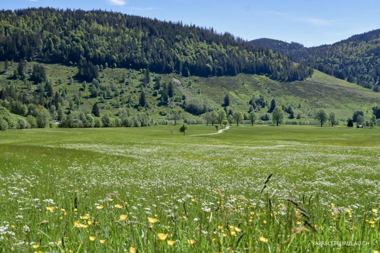 Geniesserpfad, balade nature autour de Menzenschwand