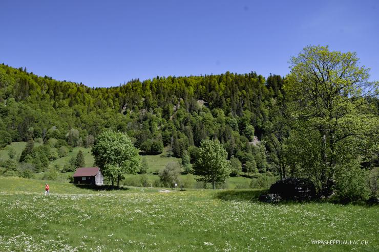 Geniesserpfad, balade tranquille en Forêt Noire du Sud autour de Menzenschwand